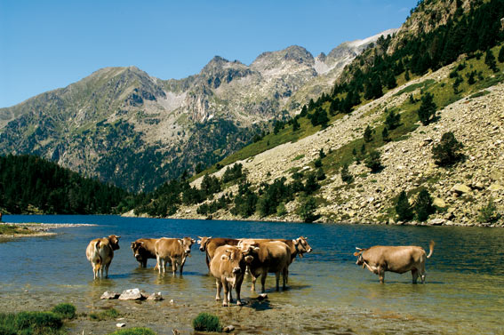 Aiguestortes kuh see Nationalpark Aigüestortes in den Pyrenäen